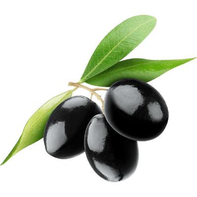 Olive tree extract