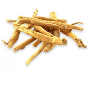The Indian herb ashwagandha