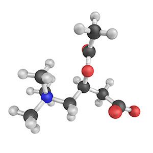 Acetyl-L-Carnitine Arginate Benefits