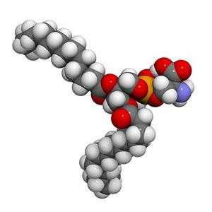 Phosphatidylserine cell structure image