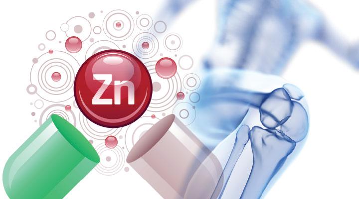 Zinc's Role in Bone Health